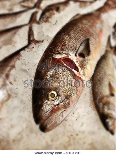 Fresh fish on ice at market. - Stock-Bilder