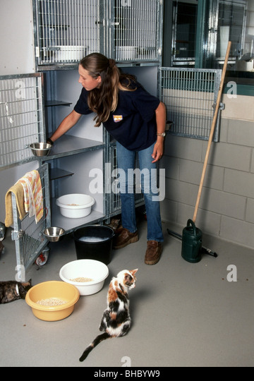 Animal Shelter Volunteer Stock Photos Amp Animal Shelter