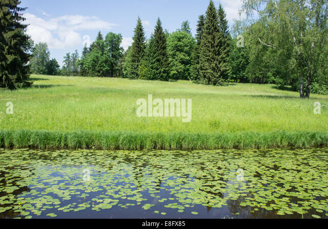 Russia, Meadow in summer - Stock Image