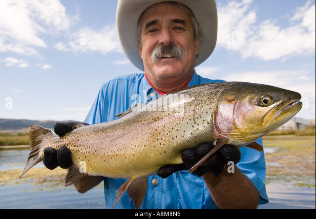 IDAHO Fly fisherman releasing large rainbow trout from spring fed creek MR - Stock Image
