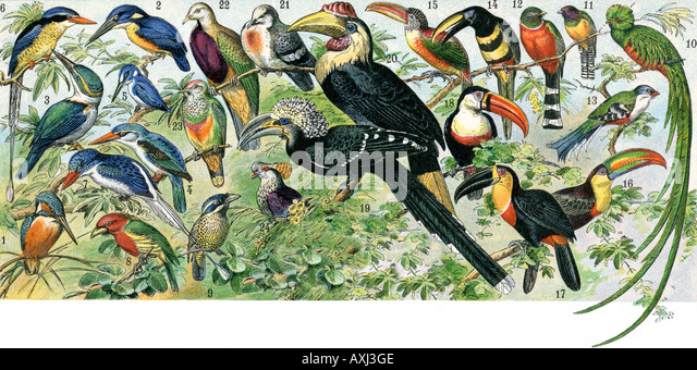 Quetzal right toucans and some other tropical birds - Stock Image