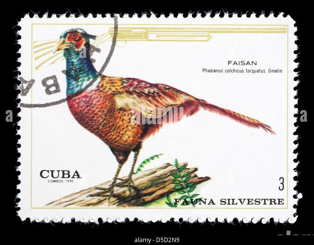 C Ring Necked Pheasant Stamp
