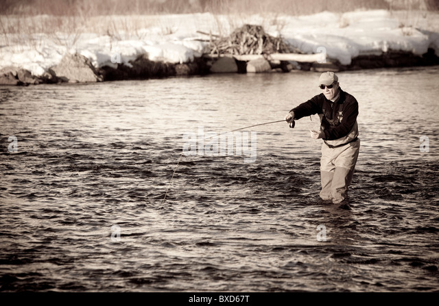 An experienced fishermen casts into the Provo River, Utah. - Stock Image