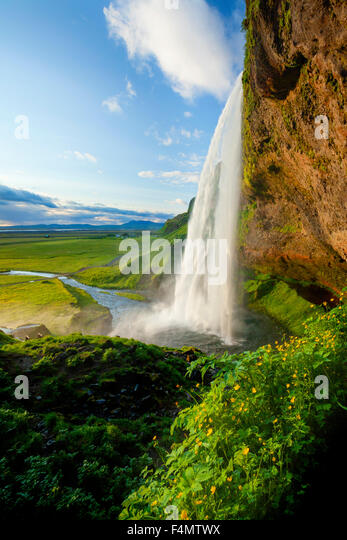 Buttercups beside 60m-high Seljalandsfoss waterfall, Sudhurland, Iceland. - Stock-Bilder