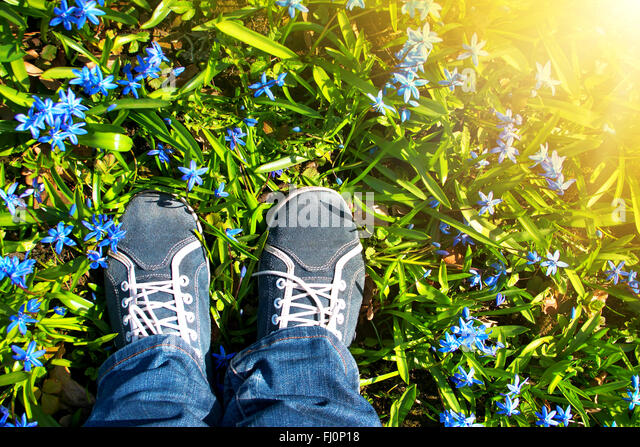 Feet standing on Scilla flowers in the park - Stock Image