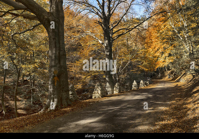 Hot colors in the forest regional park of Campo dei Fiori Varese, Autumn season - Stock Image