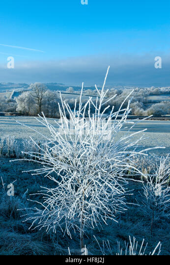 Powys, Wales, UK. 29th December 2016.  Very cold and frosty in Mid Wales at daybreak with temperatures dropping - Stock Image