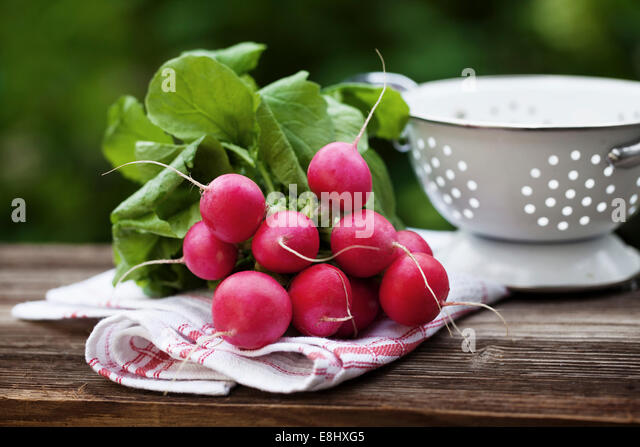 Fresh raddish on a towel in a garden - Stock Image