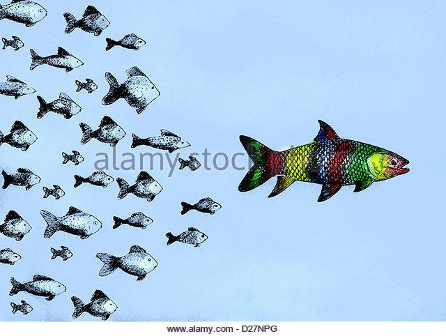Small fish following large multicolored fish - Stock-Bilder