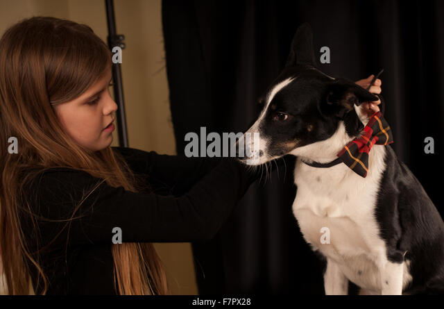 Girl dress dog with bow-tie - Stock Image