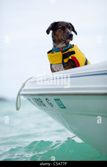 Dog riding in a boat - Stock Image