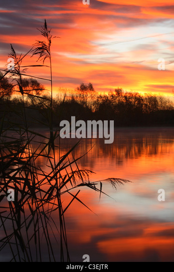 Silhoutted reeds and vibrant sunrise color reflected in the carp ponds near Fairford during Autumn in the Cotswolds - Stock Image