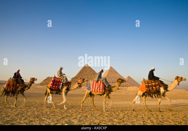 Camels at the Pyramids, Giza, Cairo, Egypt - Stock Image