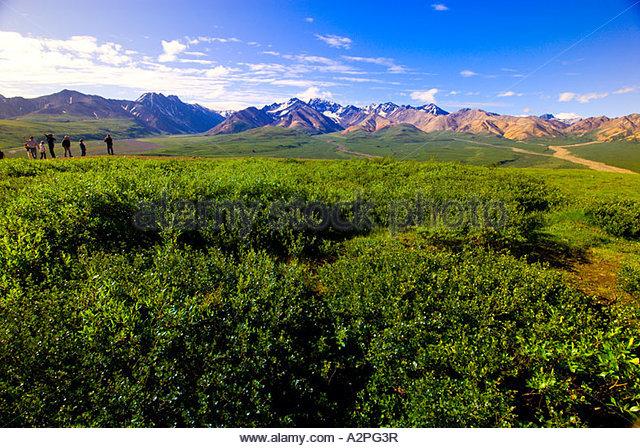 Alaska Range from Polychrome Pass Denali National Park Alaska - Stock Image