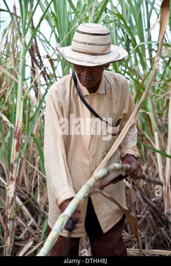 Panamanian man cutting sugarcane near Penonome in the Cocle province, Republic of Panama. - Stock-Bilder