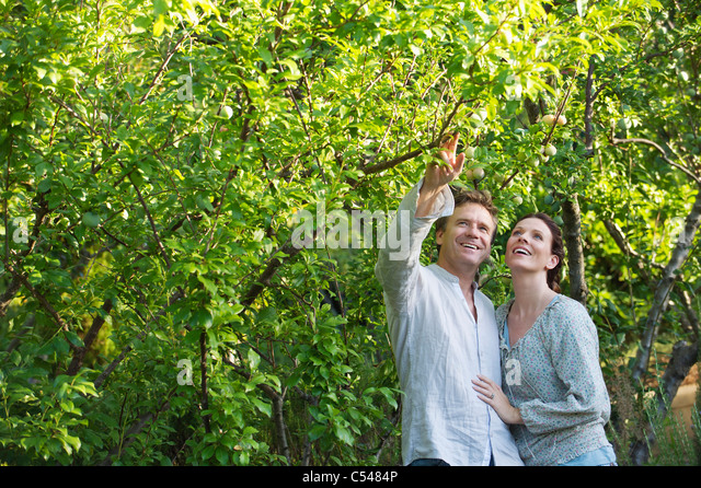 Mature couple picking fruits in a garden - Stock Image