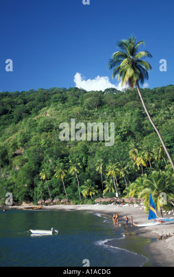St Lucia beach anse chastanet resort with black sand beach with palm tree background - Stock Image