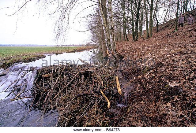 Biberfra stock photos biberfra stock images alamy Habitat deutschland