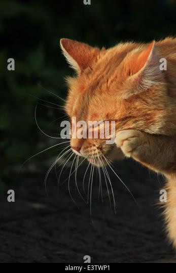 cat arthritis remedy