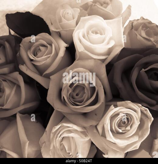 Bunch of roses, monochrome, bronze / sepia toning - Stock Image