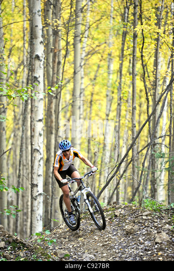 Female bicyclist riding on a trail in a birch forest at Ester Dome, Fairbanks, Interior Alaska, Autumn - Stock Image