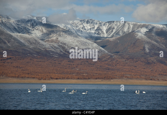 Snowcapped mountains and lake edge in Bayan Olgii Aimag in the region of Tsengekhayrkhan, against snowcapped peaks - Stock Image