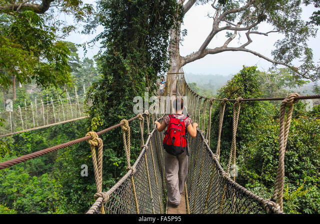 Kakum National Park is a 375 square km national park located in the Central Region of Ghana - Stock Image