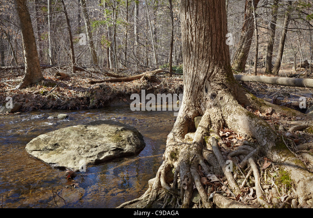Big Hunting Creek below Cunningham Falls, Cunningham Falls State Park, Maryland. - Stock Image