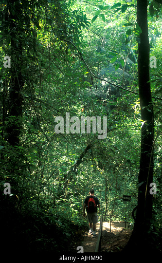 Belize Central America hiking Blue Hole National Park jungle walk hike - Stock Image