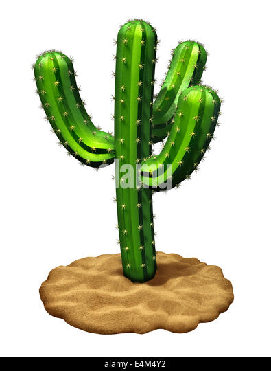 Cactus plant on a desert sand floor isolated on a white background as a three dimensional,symbol of hot dry weather - Stock Image