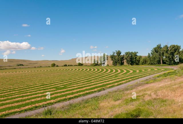 Washington, The Palouse, farm, contour farming plowing - Stock Image