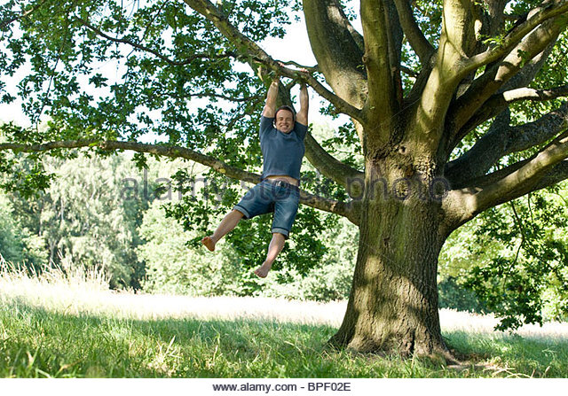 A young man swinging from the branch of a tree - Stock Image