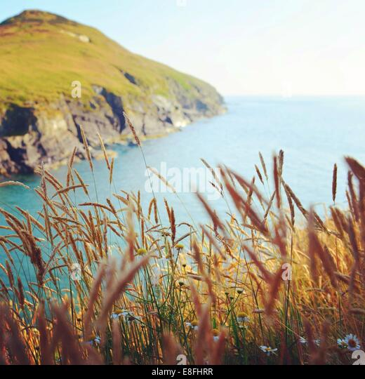 Reeds by coast - Stock Image