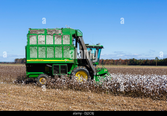 Cotton harvesting near Edenton, North Carolina, USA - Stock Image
