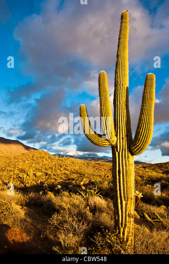 Four Peaks (Yavapai: Wikopa, at 7657 feet (2335 m) in altitude, is a prominent landmark on the eastern skyline of - Stock Image