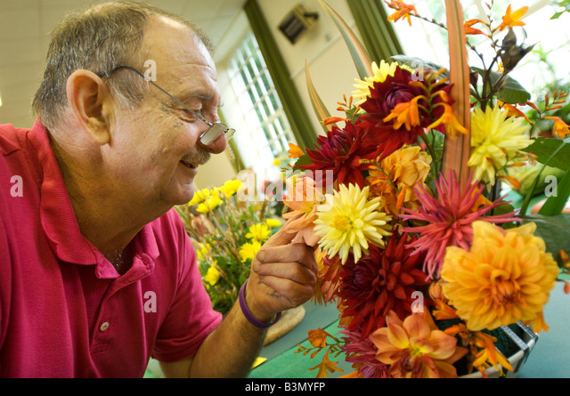 An elderly man enjoying an inexpensive day out admiring the dahlia entries in a village show in Cornwall. - Stock Image