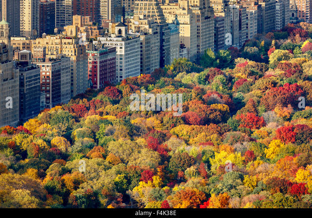 Aerial view of brilliant fall colors of Central Park West foliage in late afternoon. Upper West Side, Manhattan, - Stock Image