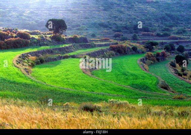 Terraced farm fields near As Soudah; Asir Region; Kingdom of Saudi Arabia - Stock Image