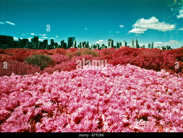 Color infrared view of Central Park and midtown from the roof of the Metropolitan museum in New York City. © - Stock Image