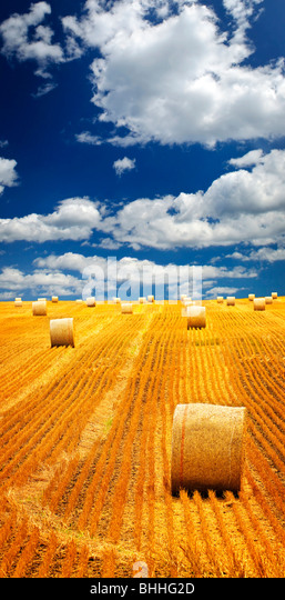 Agricultural landscape of hay bales in a golden field - Stock-Bilder