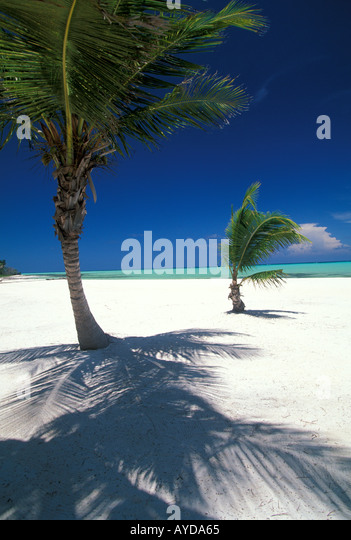 Dominican Republic island vertical vert beach Playa Juanillo beach cap cana  Punta Cana  palm trees and water - Stock Image