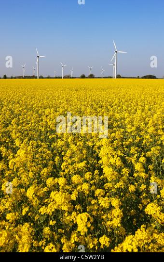 Germany, Lower Saxony, Wind park - Stock Image