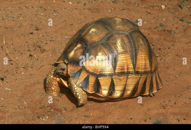 tortoise world sussex
