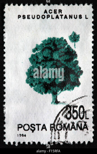 Posta Romana 350L treeAcer Pseudoplatanus L 1994 Stamp - Stock Image