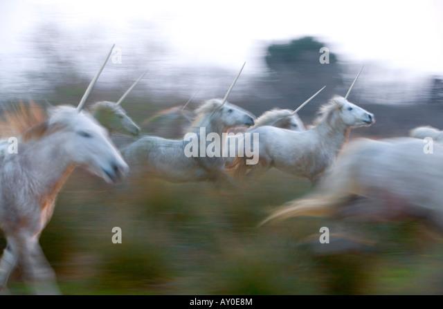 Unicorn herd - Stock Image