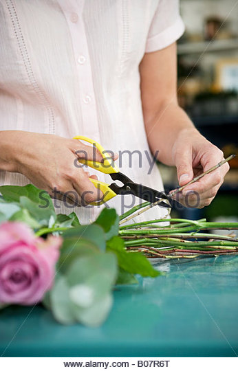 Woman's hands tying together a bouquet of pink and white roses - Stock-Bilder