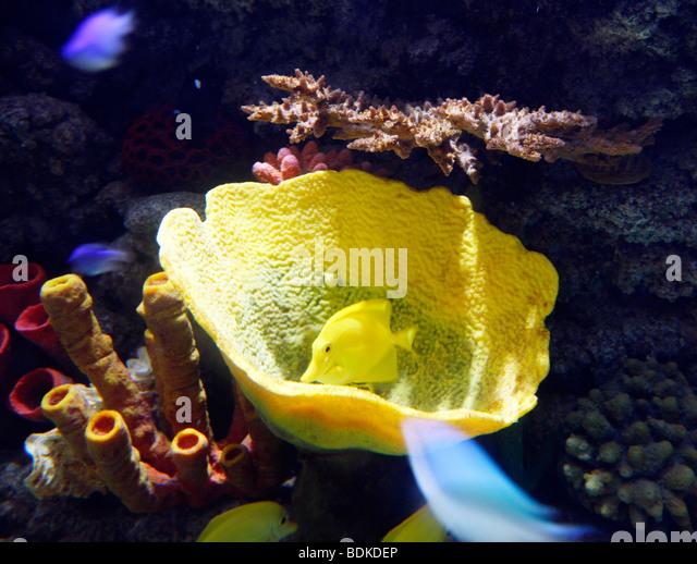 Dubai Aquarium and Underwater Zoo, saltwater aquarium in Dubai Mall ...
