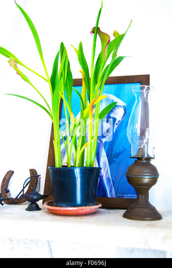 Portrait of devout Christian woman on mantelpiece with potted plant, lamp and horseshoe - Stock Image