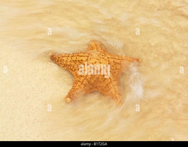 Dominican Republic Punta Cana Bavaro Beach,Starfish in surf on beach - Stock Image