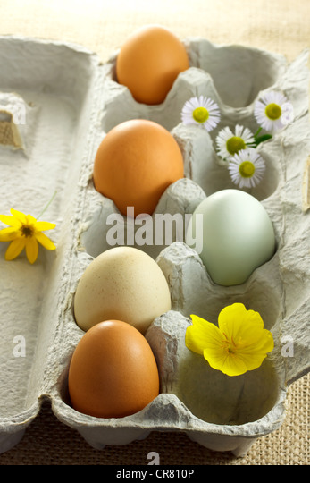 Fresh Organic Eggs in Carton - Stock Image